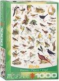 Birds :: Eurographics