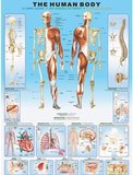 The Human Body :: Eurographics