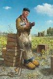 Aardappelsteker :: Marius van Dokkum