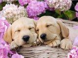 Schattige Hondjes in een Mand :: Ravensburger