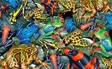 Big Frogs :: Piatnik