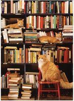 Cobble Hill 500 (XL) - Gotham Bookstore Cats