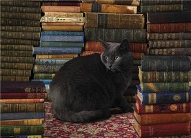 Cobble Hill 1000 - Library Cat