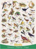 Eurographics 1000 - Birds