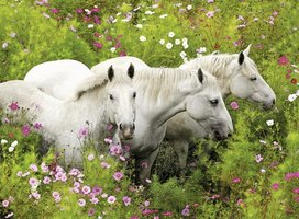 Ravensburger 300 (XXL) - Paarden tussen de bloemen