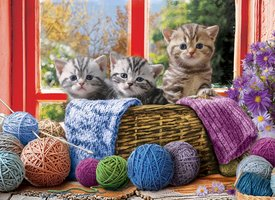 Eurographics 500 (XL) - Knittin' Kittens