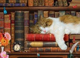 Eurographics 500 (XL) - The Cat Nap