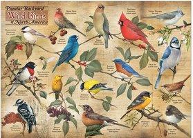 Cobble Hill 1000 - Popular Backyard Wild Birds