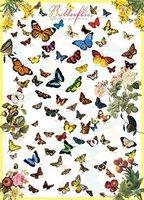 Eurographics 1000 - Butterflies