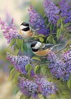 Cobble Hill 1000 - Chickadees and Lilacs