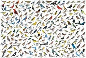 Eurographics 1000 - The World of Birds