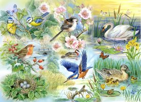House of Puzzles 250 (XL) - Feathered Friends