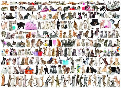 The World of Cats :: Eurographics