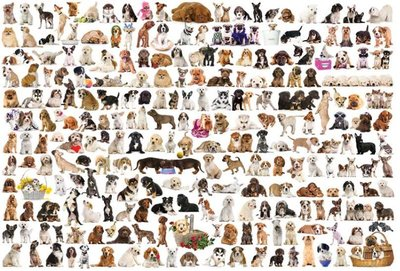 The World of Dogs :: Eurographics