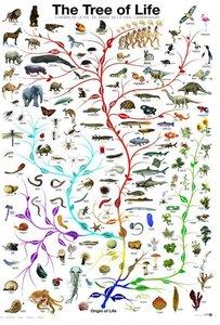 The Tree of Life :: Eurographics