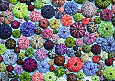 Sea Urchins :: Piatnik