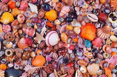 Seashell :: Piatnik